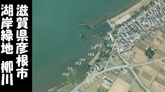 【琵琶湖東 彦根市】『湖岸緑地 柳川』の釣り場ガイド(釣れる魚・駐車場)