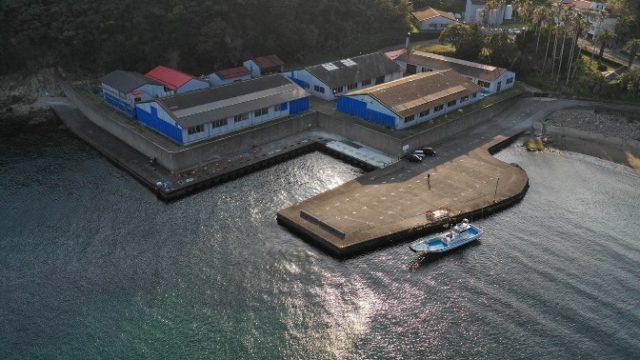 【南伊豆町】『本瀬港』の釣り場ガイド(釣れる魚・駐車場・トイレ)