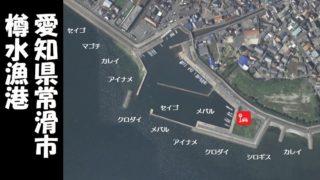【穴場スポット|常滑市】『樽水漁港:たるみぎょこう』の釣り場ガイド(駐車場・釣れる魚)
