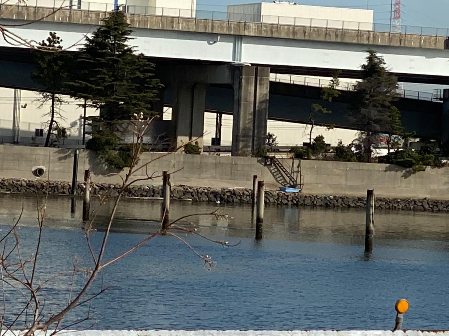 【ウナギが狙える!】『筏川河口:いかだがわかこう』の釣り場ガイド(駐車場・釣れる魚)
