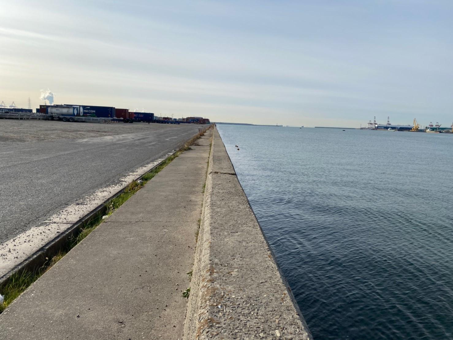 【クロダイ・スズキに定評】『飛島埠頭:とびしまふとう』の釣り場ガイド(駐車場・釣れる魚)