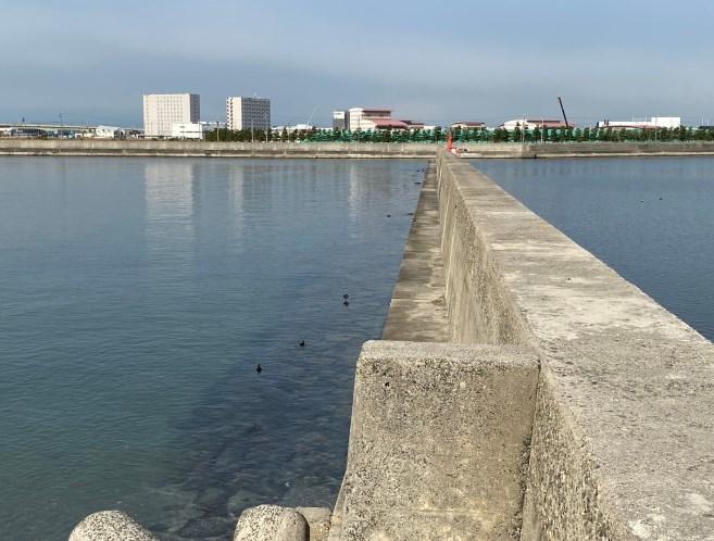 【アジやクロダイ!】『常滑港&前島港』の釣り場ガイド(駐車場・釣れる魚)