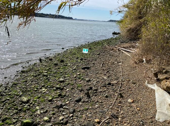 【浜名湖】『白洲町庄内湖奥 西岸』の釣り場ガイド(駐車場・コンビニ・釣れる魚)