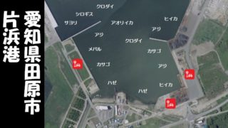 【魚種が多彩!田原市】『片浜港:かたはまこう』の釣り場ガイド(駐車場・トイレ・釣れる魚)