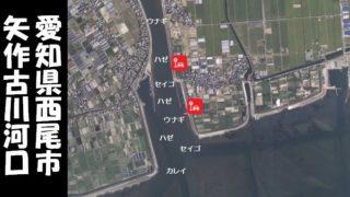 【夜のウナギ】『矢作古川河口:やはぎふるかわかこう』の釣り場情報(駐車場・釣れる魚)